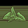 Nuestra Carta de Chocolate Mint - Churros Factory